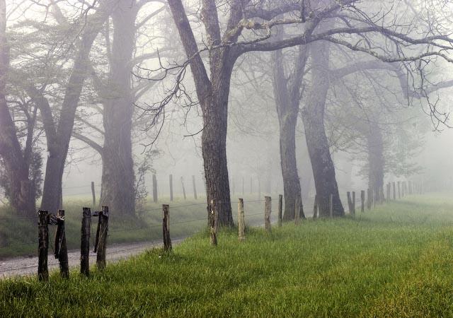 Cade Cove Road in Fog
