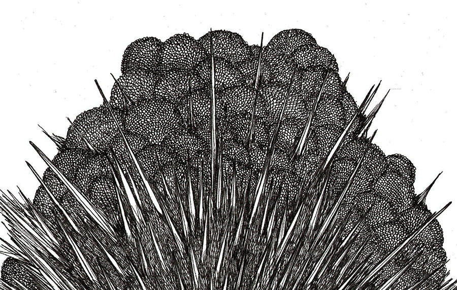 Magnetic growth No05-detail1.jpg