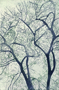American Elm II,  Etching with aquatint and soft ground