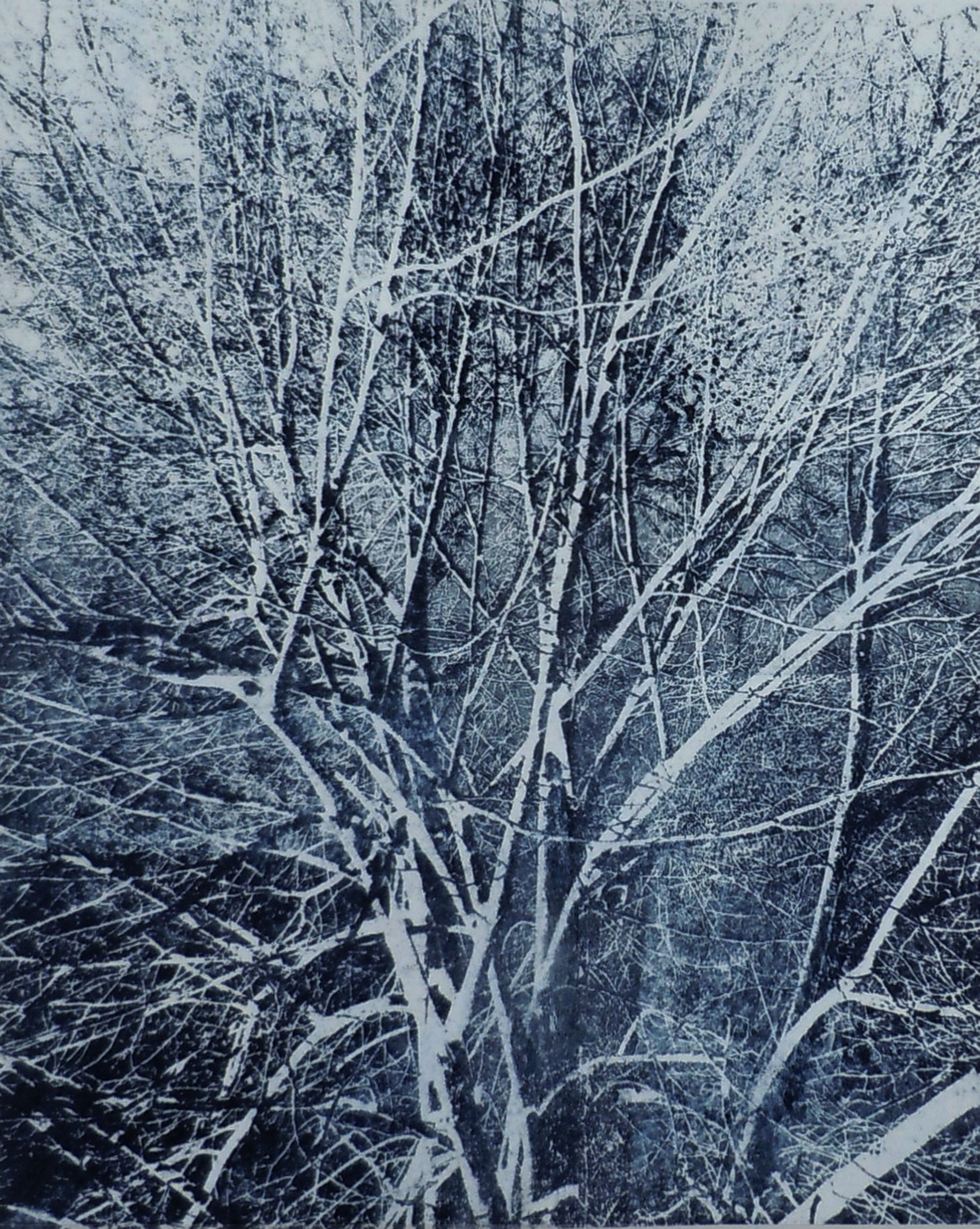 Branches IV , Unique Paper Plate Lithograph