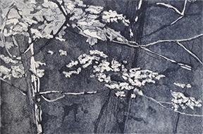 Maples (Grey)
