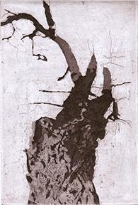 Black Locust II