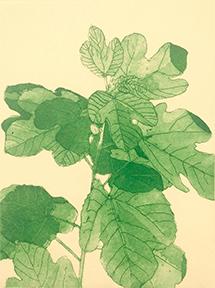 Small Fig Tree III