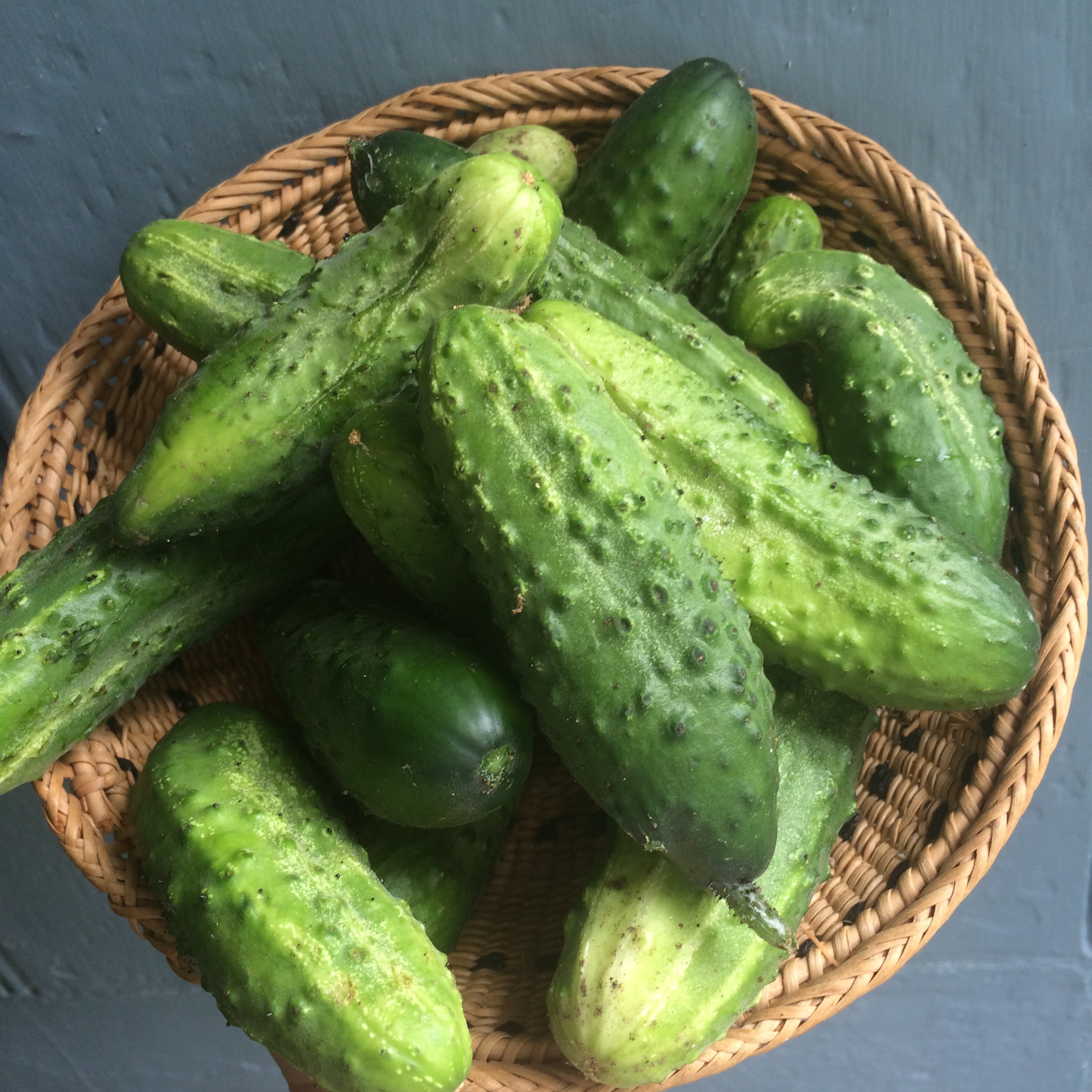 Cucumber pickles from the garden