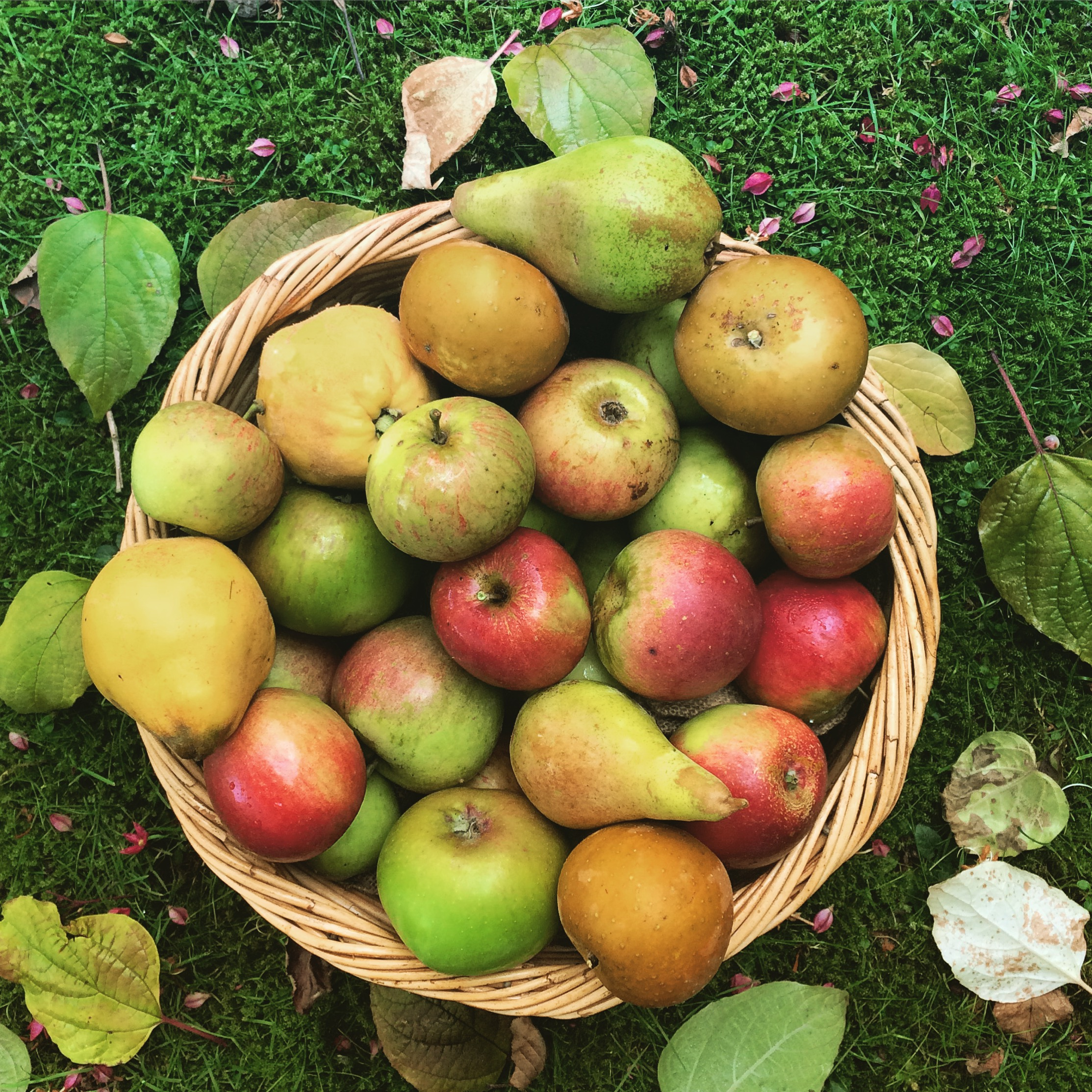 Apples and pears from the garden