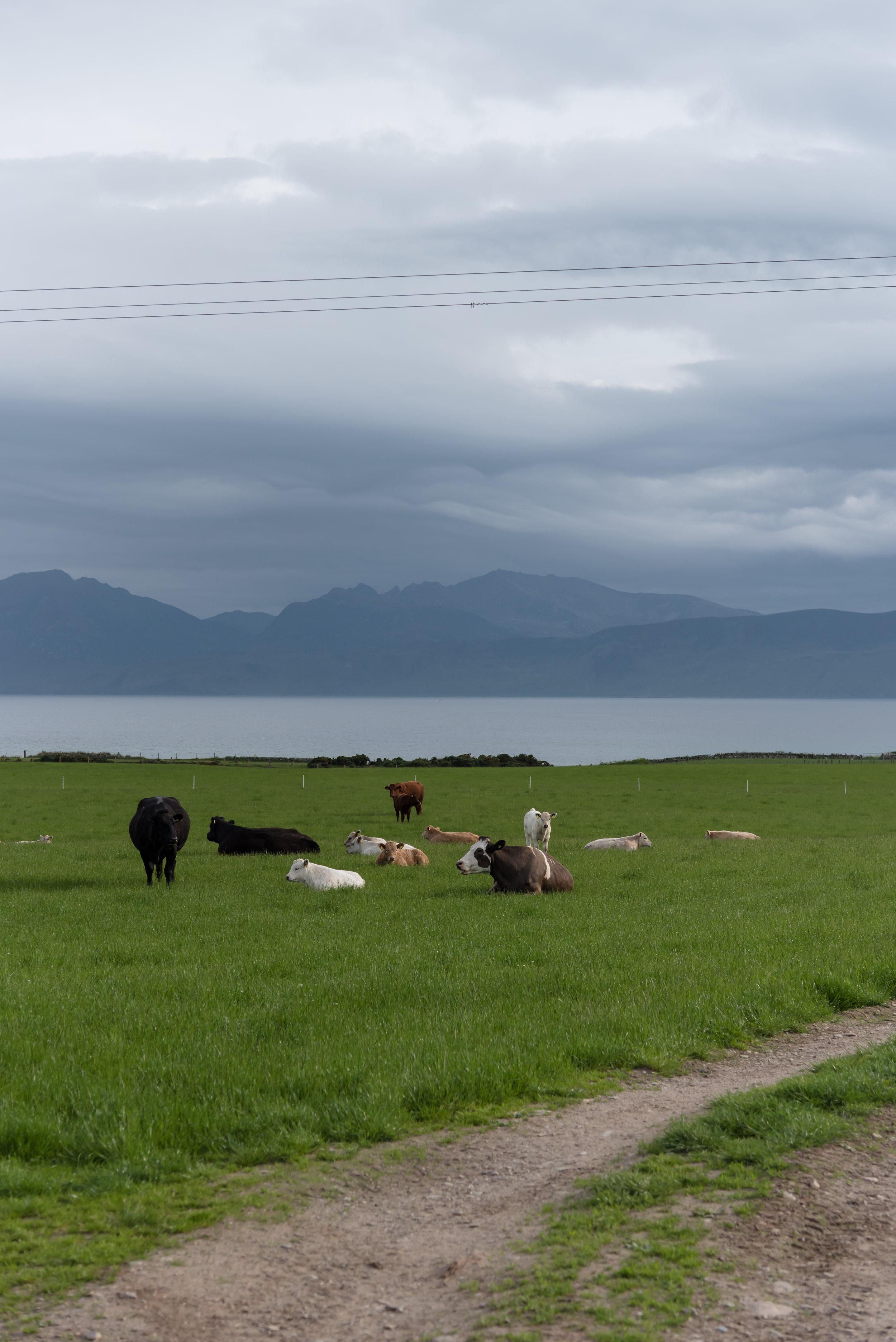 Scotland.AU.197.jpg