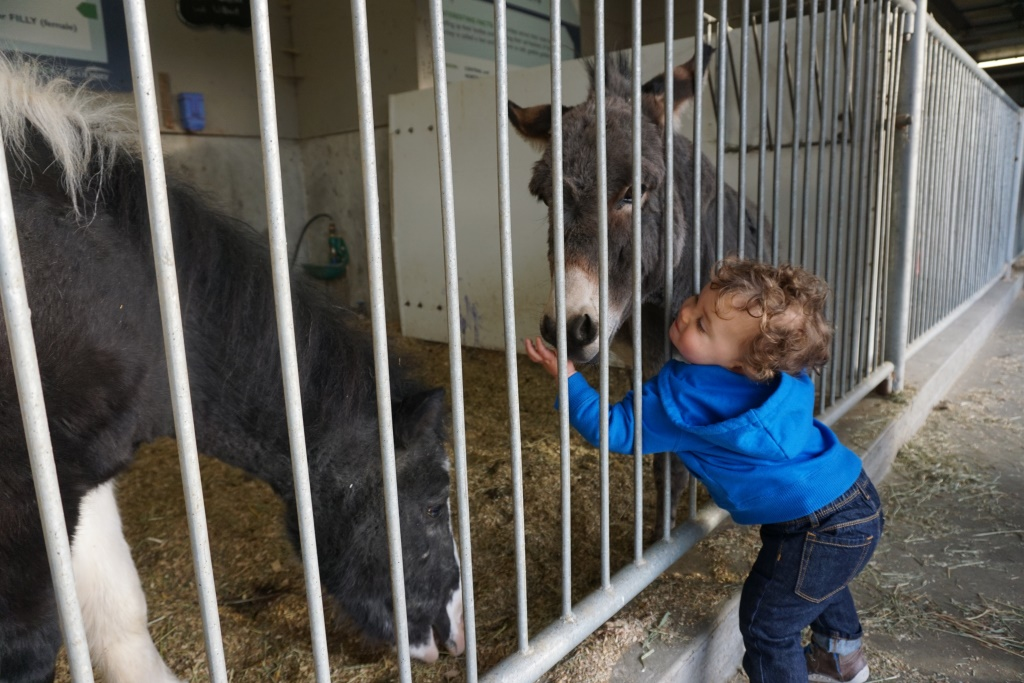 Friendly donkey.JPG