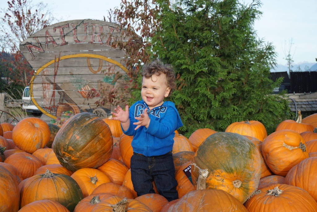 Pumpkin Patch 1.JPG