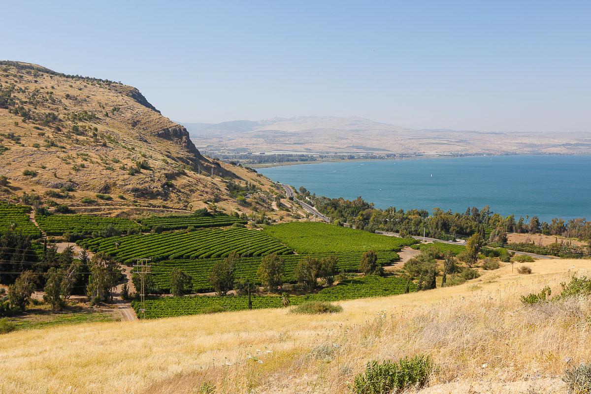 Tierra Santa: Sembradíos frente al Mar de Galilea. Foto: Gustavo Kralj/Gaudiumpress