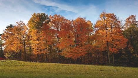 Paisaje de otoño en la provincia de Ontario (Canadá)