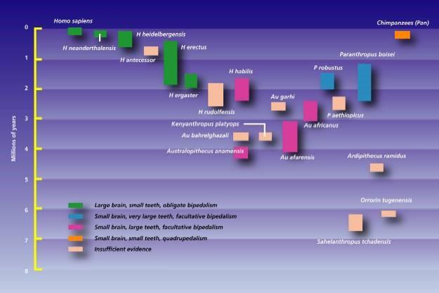 Figure 2: Comparison of species to cranium configuration