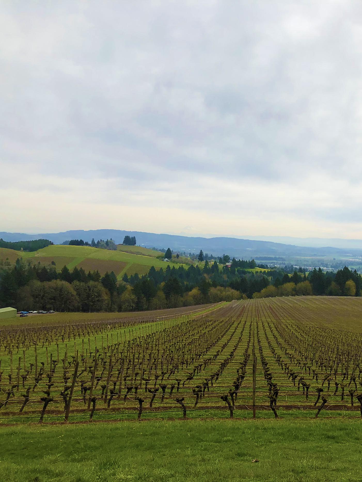oregon vineyard.jpg