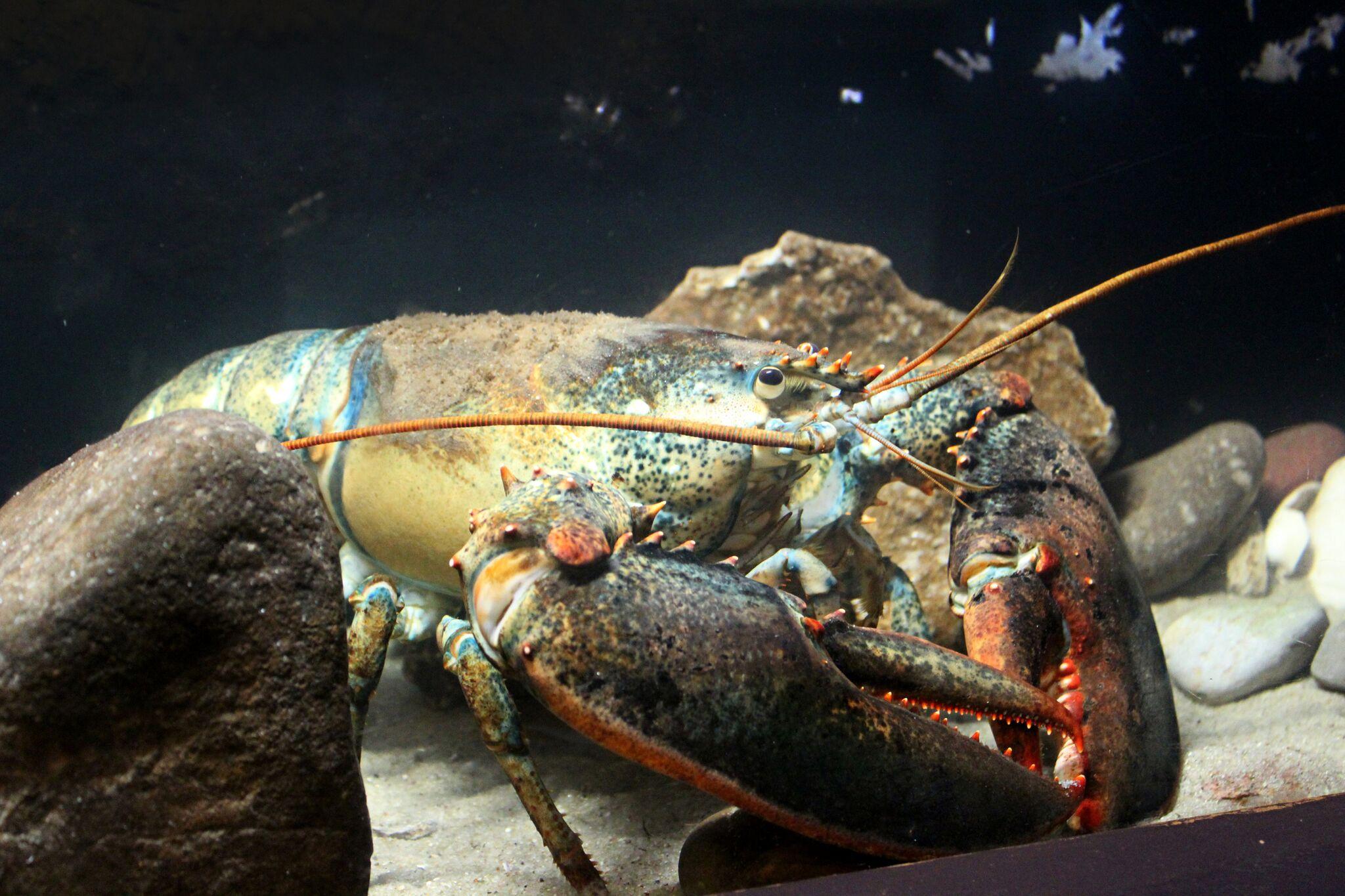 dino-crab.jpg