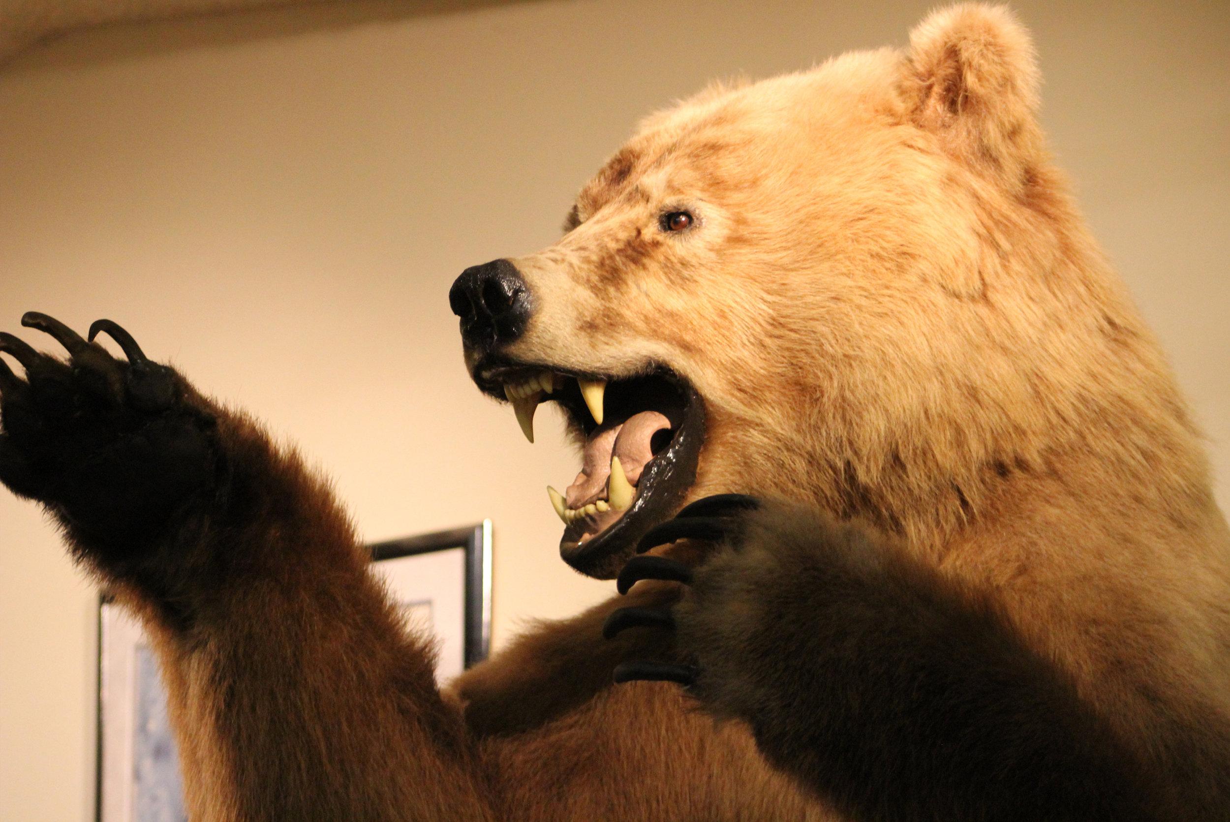 dino-bear.jpg