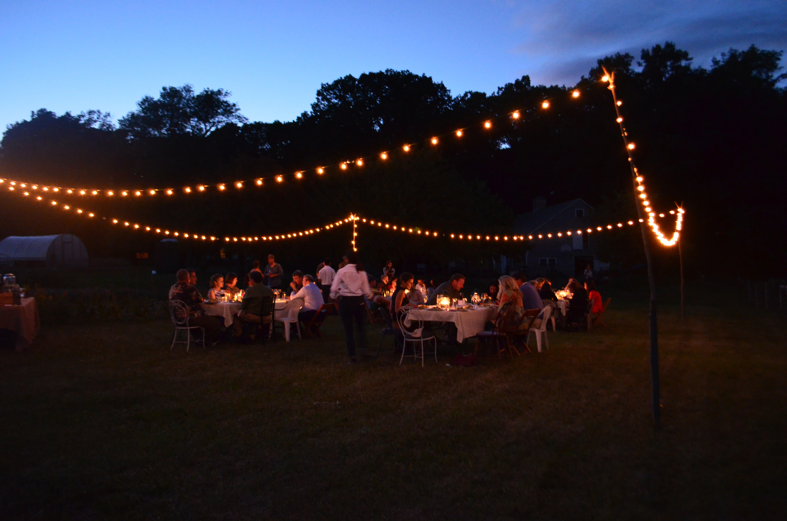 Dinner under the lights on Eddy Farm