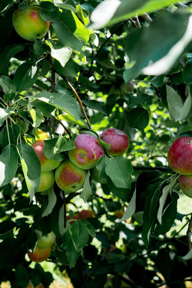 Lyman's Orchard-1-1.jpg