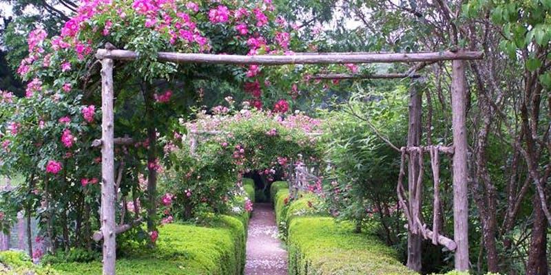 garden party.jpeg