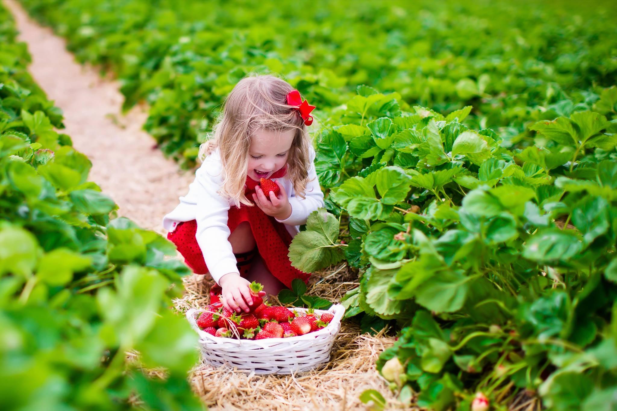 lyman orchards strawberry festival.jpg