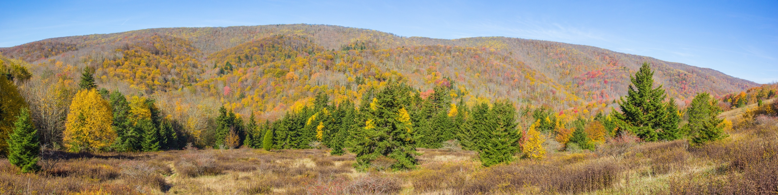 Panoramic view of the Seneca Creek watershed. Taken from a high meadow on Spruce Knob.