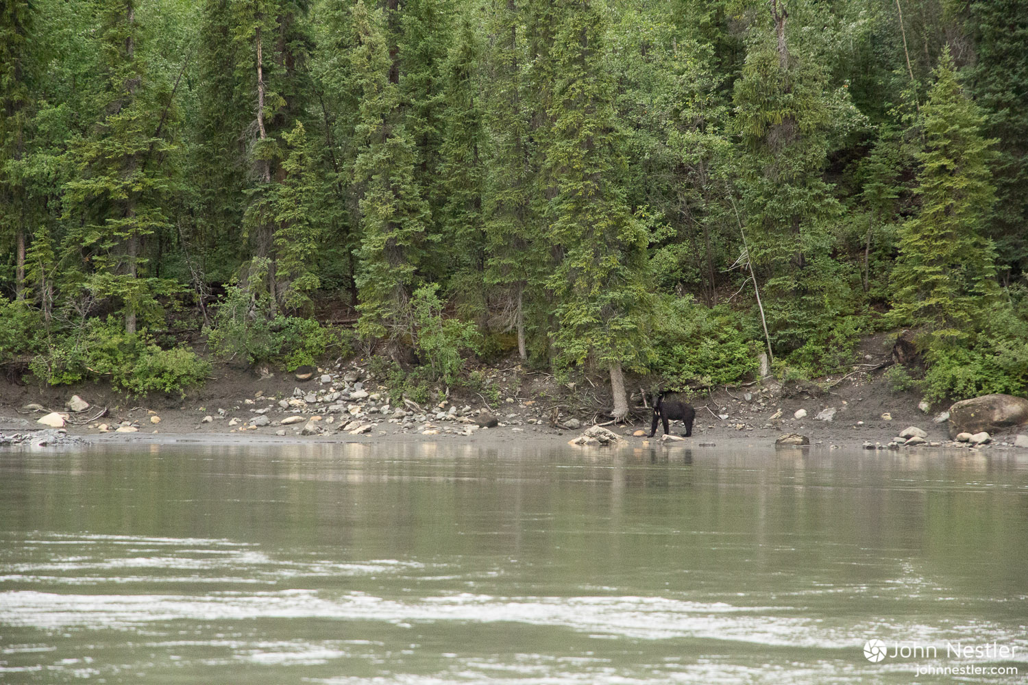 One of the black bears looking on as we floated past.