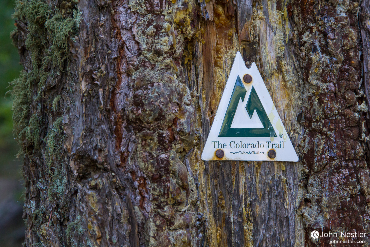 The classic Colorado Trail confidence marker, a comforting sight.
