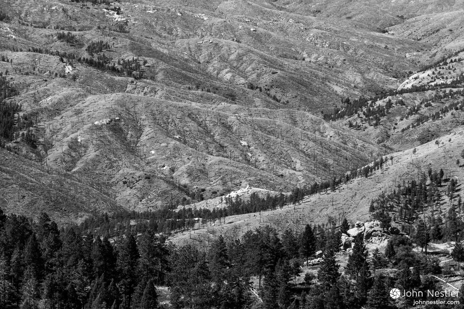An aerial view of the devastation from the 1996 Buffalo Creek fire. You can clearly see how slowly revegetation takes place in these Ponderosa Pine stands. Shot around Segment 2.