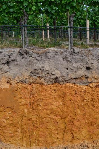 Hallberg Ranch - Goldridge Loam & Sandy Clay with Roots