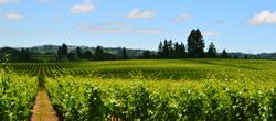 Hallberg Ranch Vineyard
