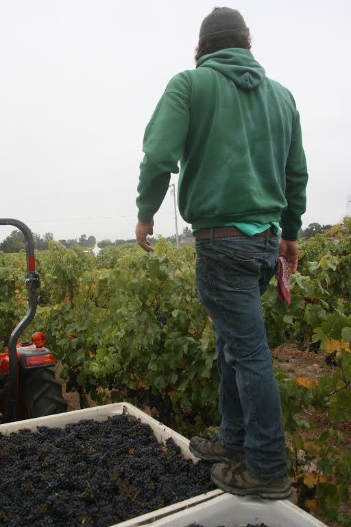 Teac Mor Harvest | VAULT29