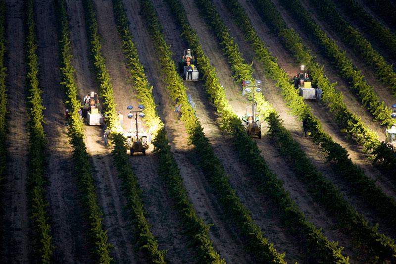 Night Harvest at Laetitia
