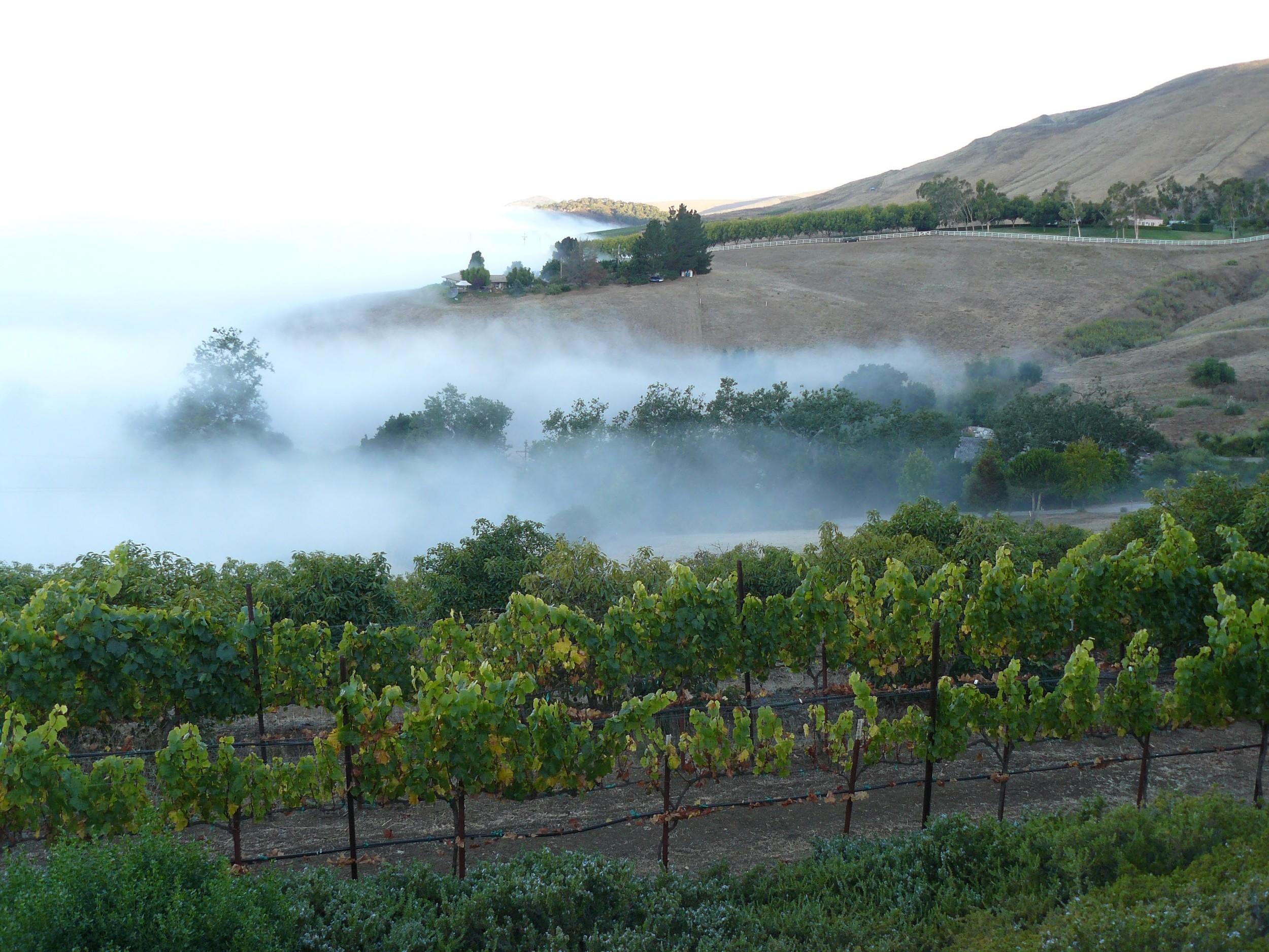 SLO Coast Fog over Vineyards via Phantom Rivers | VAULT29