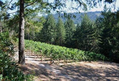 Vineyard {511}on Diamond Mountain