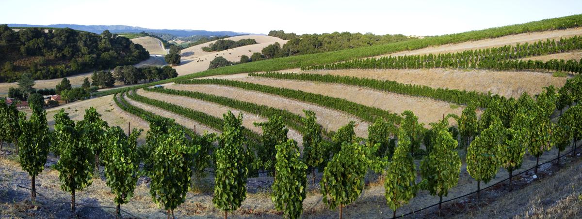 Caliza - Grenache Terrace Vineyards | VAULT29