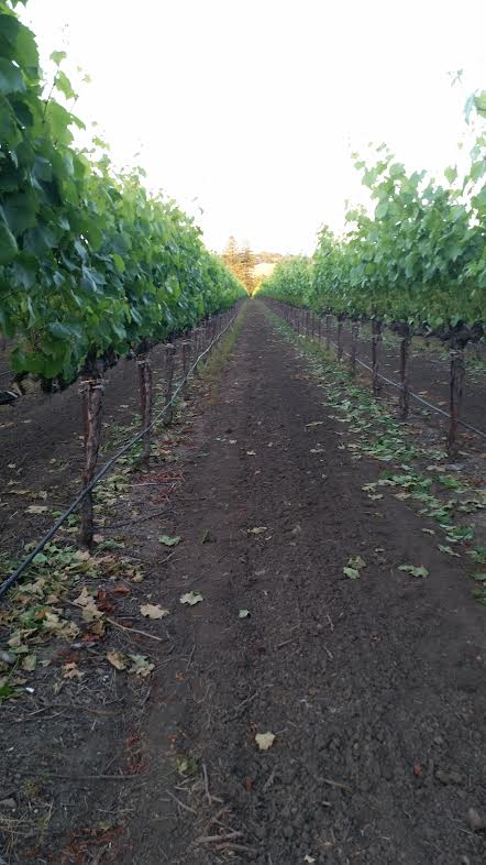Erin E. Wines Vineyard Site | VAULT29