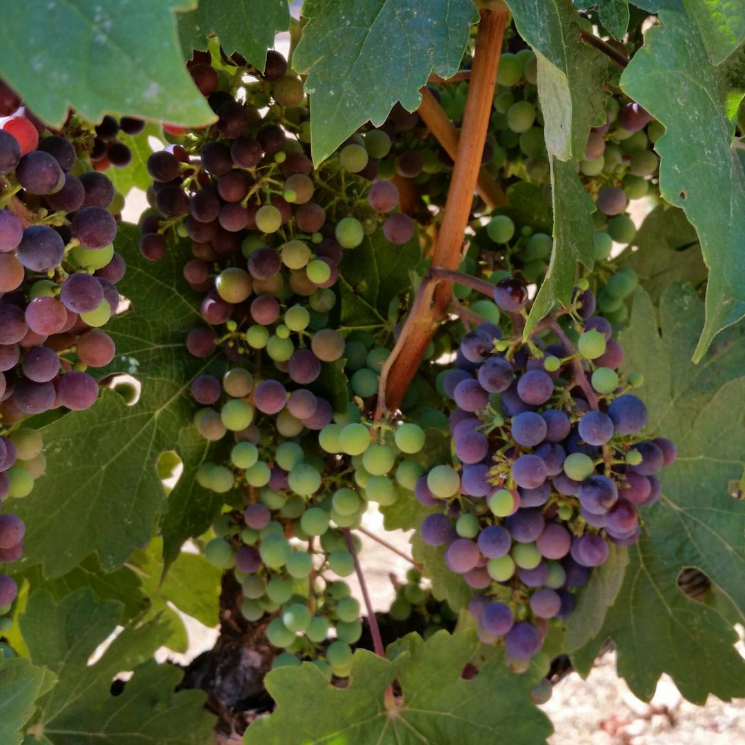 VAULT29 Winery Wine Experience