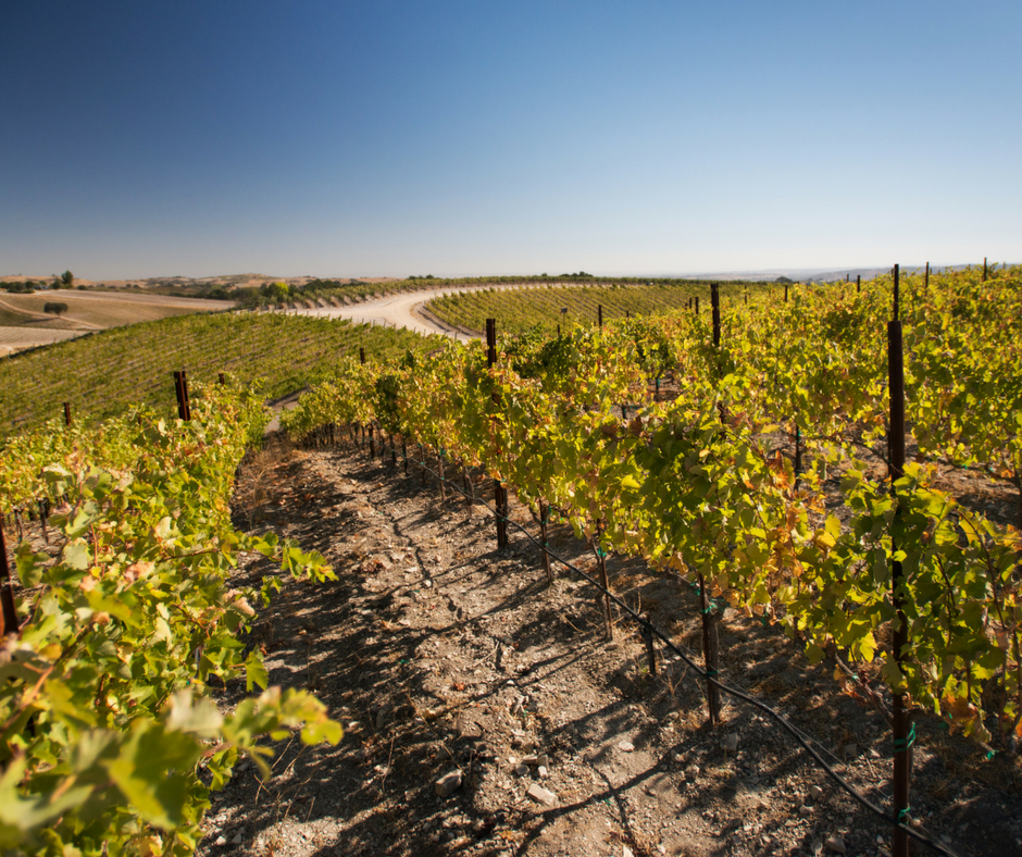 Catapult Vineyard