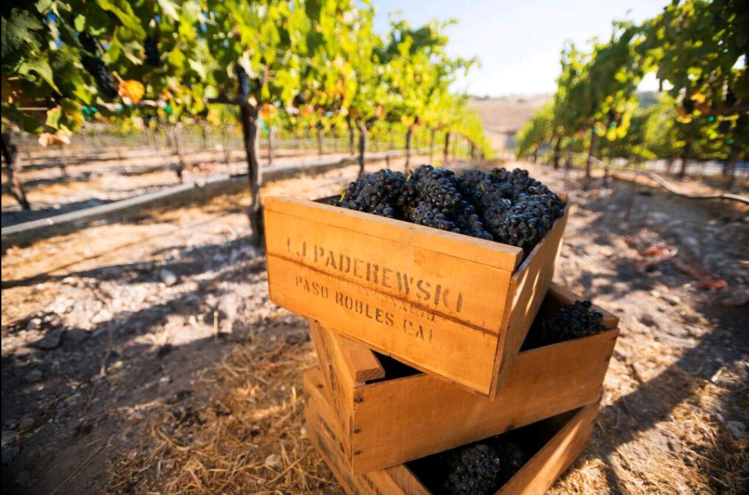 Original fruit boxes from Paderewski's winemaking days holding Epoch fruit in Paderewski vineyard.