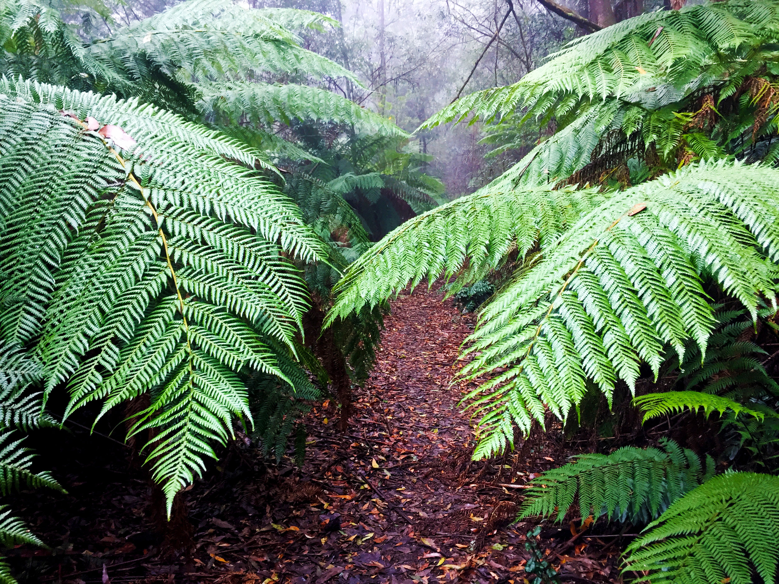 The Myrtle Gully Trail