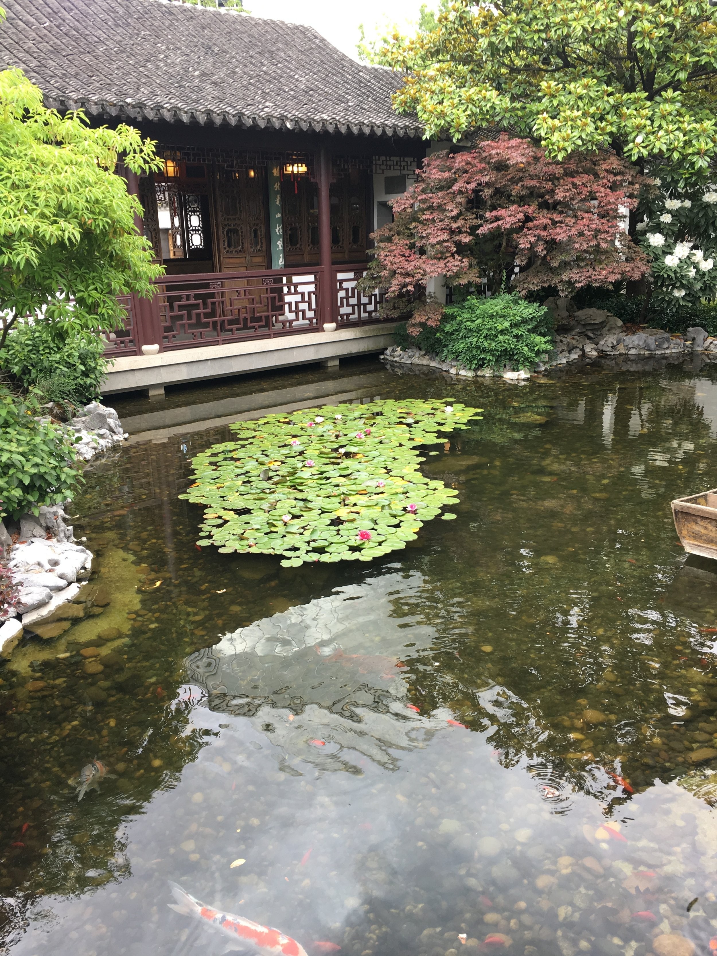 Lan Su Chinese Garden  in Portland Chinatown.  Probably the most authentic Chinese garden in the states I ever seen.