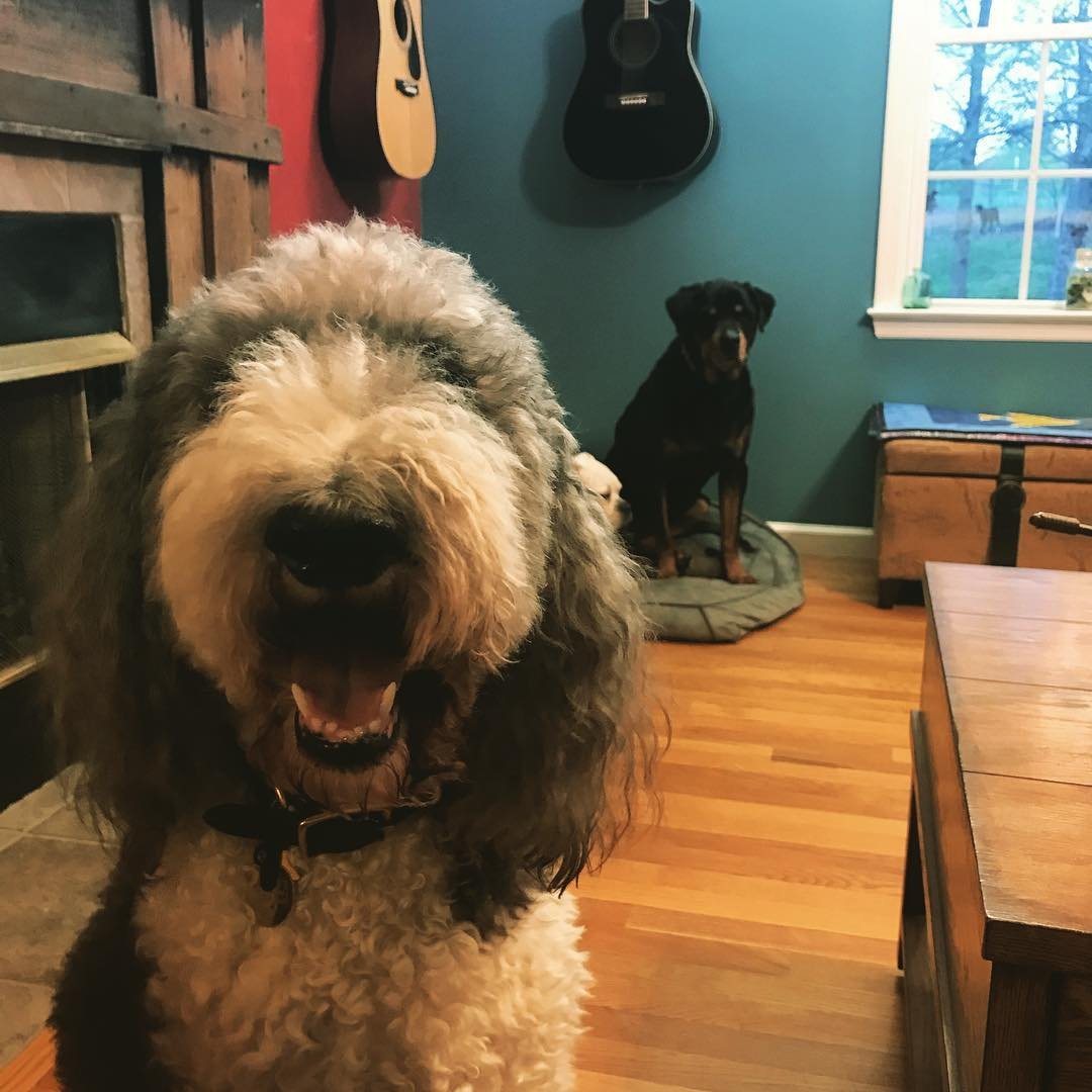 """Every effort is made to ensure that each guest is calm, happy, and stress-free. Special music called """"Through a Dog's Ear"""", clinically proven to soothe and calm dogs, is played in the guest room as well as an Adaptil diffuser, which provides soothing pheromones."""