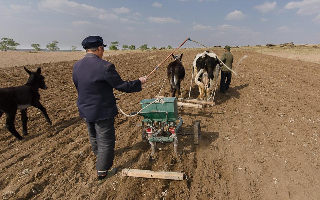 Planting flax seed