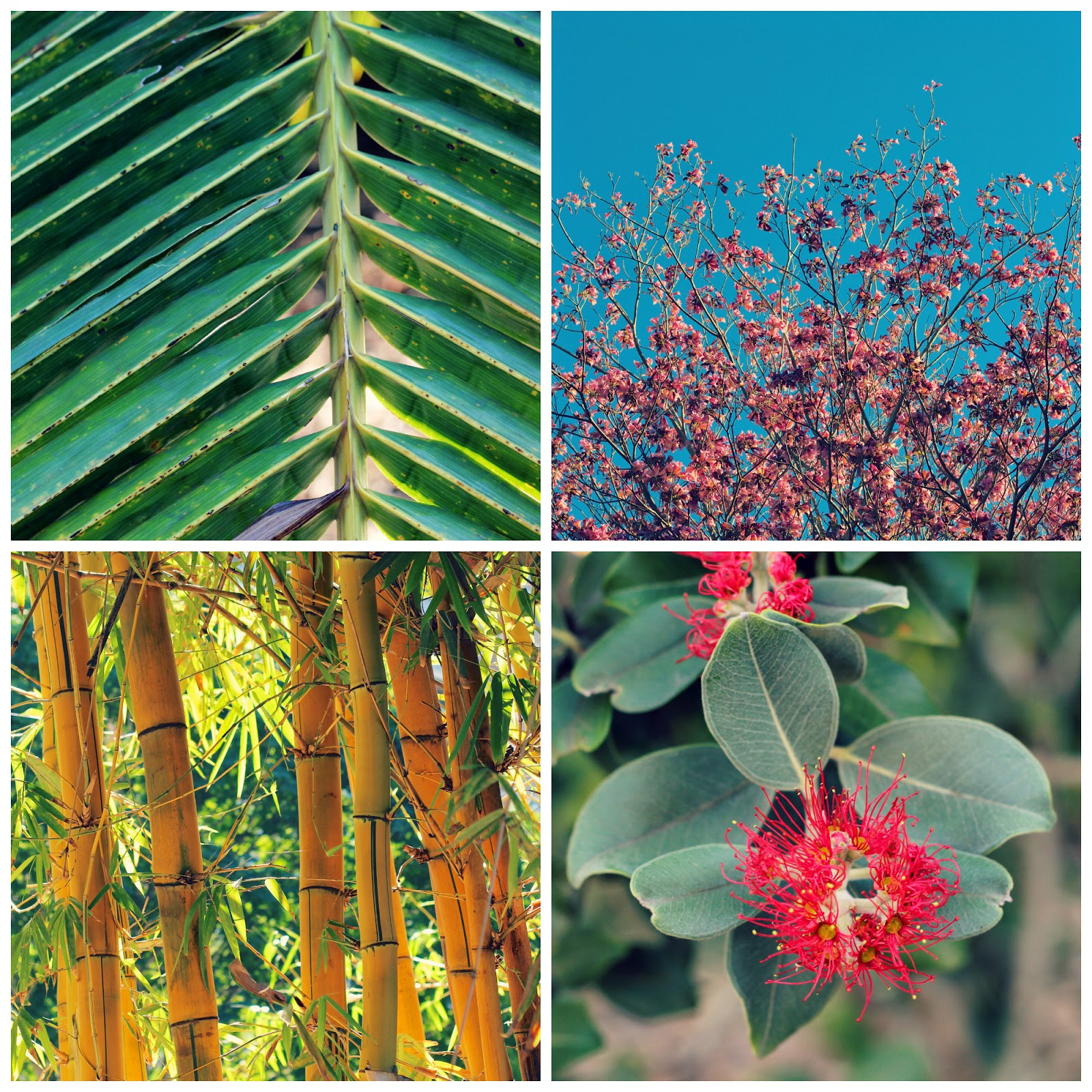 Australia+blog+3.jpg