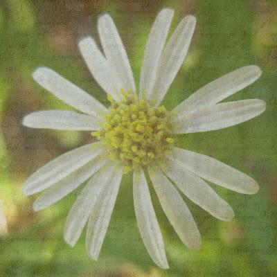 textured+flower.jpg