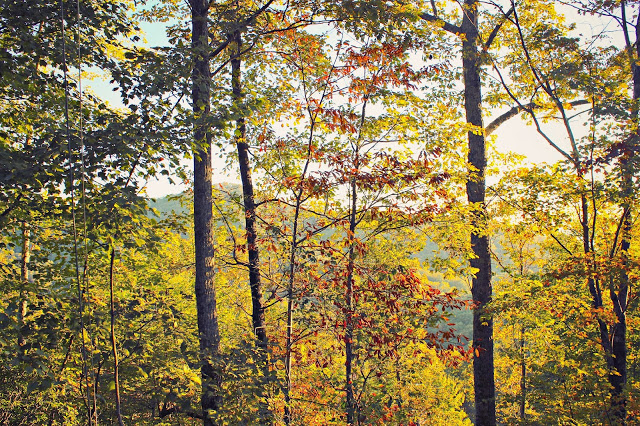 Ellijay+woods.jpg