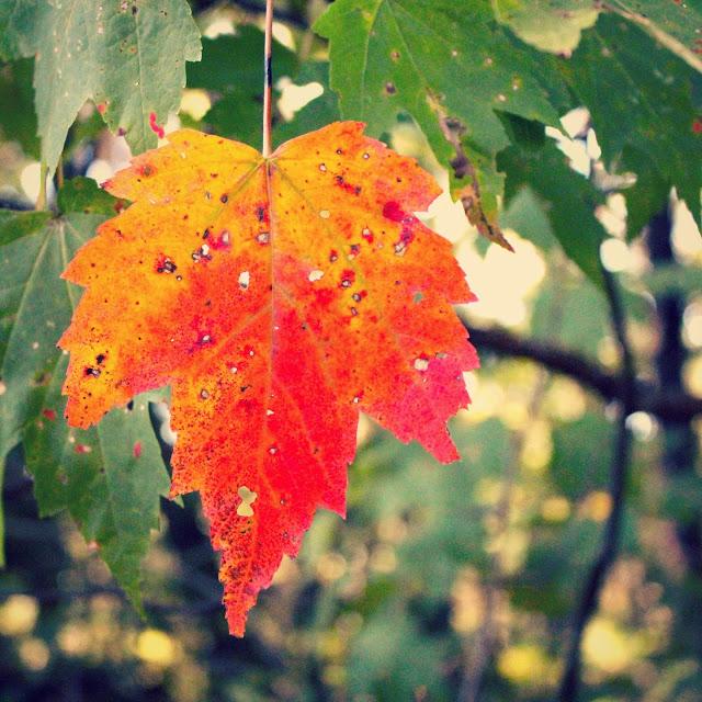 red+leaf.jpg