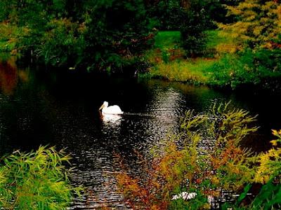 peaceful+pelican.jpg