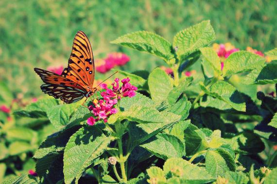 Butterfly3_opt.jpg