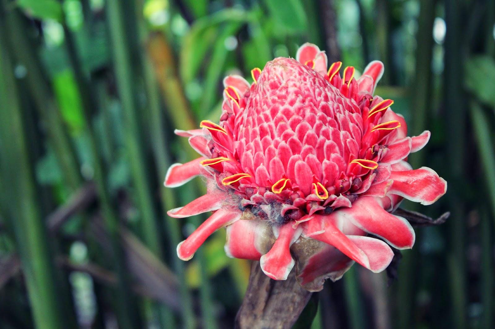 rainforest+flower2.jpg