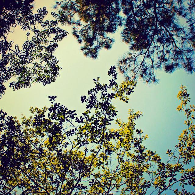 trees+%28smaller%29.jpg