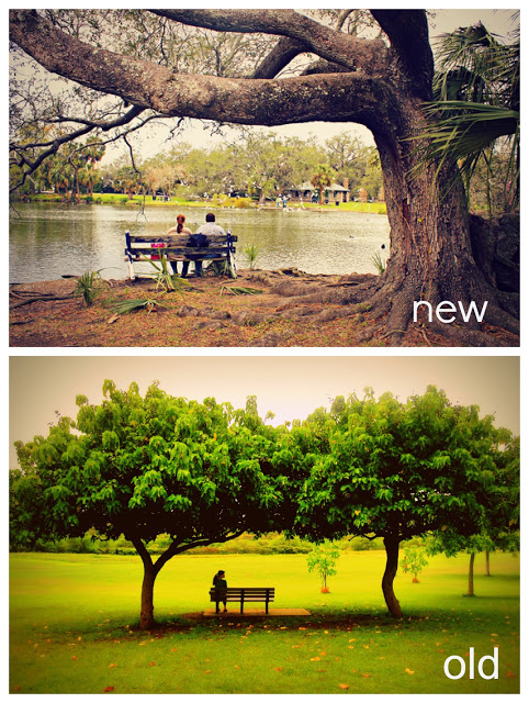 +benches+and+trees+with+text.jpg